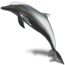 animal dolphin icon
