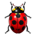 bug insect ladybird animal bug insect ladybird icon